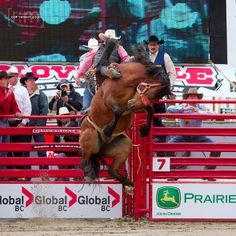 They push off the shoot just as gate opens, that's extra horse power. It's easy enough to mark em out even when they give it 100 percent. Horse Balloons, Bronco Horse, Bareback Riding, Pro Rodeo, Rodeo Time, Bucking Bulls, Rodeo Cowboys, Bull Riders, Cowboy And Cowgirl