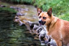 Killing of Olympic dogs mirrors our own solution - Greener Ideal