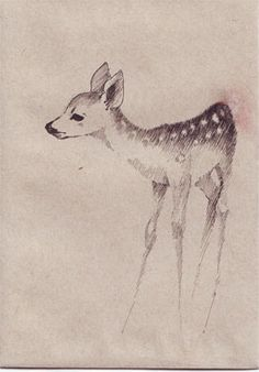 fawn by shishahdeviantartcom on deviantart