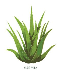 Aloe Vera Card by smalladventure on Etsy