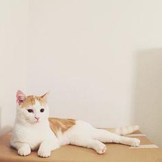 Hello cat ladies. My name is Casual-Charlie. Happy furrday!  #charliethecat #love #cute #catsofsalzburg #unterfoehring #germany #cat #thiscat #ilovemypet #catlovers #lovekittens #instapet #catsagram #kitten #kitty #catstagram #kittycat #catsofinstagram #ilovemycat #catlove #catoftheday #furry #cats_of_instagram #cats #catlife #katze #katzenliebe #süssekatze #topcatphoto