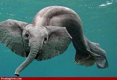 Elephant fish | Elephant fish Pictures - Strange Pics - Freaking News