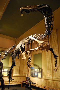 Suchomimus | Scott Anselmo AStrangerintheAlps
