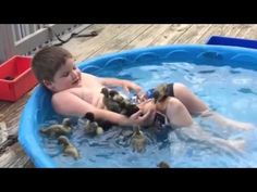 Best of 2015 Cute Funny Animals - YouTube