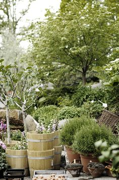 Sommar i Zetas trädgårdsbutik Garden Shop, Home And Garden, Garden Inspiration, Garden Ideas, Green Garden, Nordic Style, Country Girls, Container Gardening, Green Colors