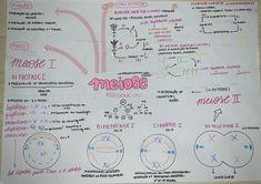 #meiose #biologia #resumo