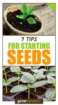 Container Gardening For Beginners 7 Tips for starting seeds like the pros! - How can you help ensure success when starting seeds? Here are the most common problems… Starting Plants From Seeds, Starting Seeds Indoors, Seed Starting, Garden Seeds, Planting Seeds, Gardening For Beginners, Gardening Tips, Flower Gardening, Tomato Seedlings