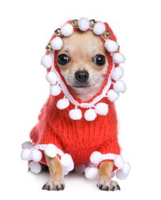 Holiday Dresses For Dogs