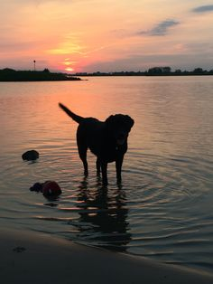 Animals And Pets, Celestial, Sunset, Dogs, Outdoor, Animals, Pets, Outdoors, Pet Dogs