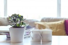 Blog - Cultivation Street Small Plants, Cool Plants, Indoor Plants, Cool Diy Projects, Garden Projects, Bamboo Palm, Dry Nose, Home Air Purifier, Easy Care Plants