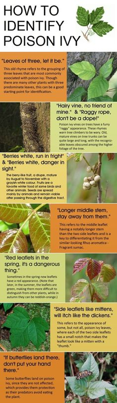 How do you identify poison ivy. This is good to know since there is poison ivy all over