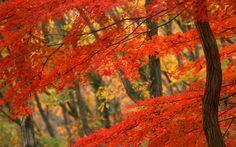Beauty Fall HD Wallpaper
