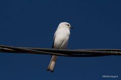 Bird by Bibiana Mandagará on 500px