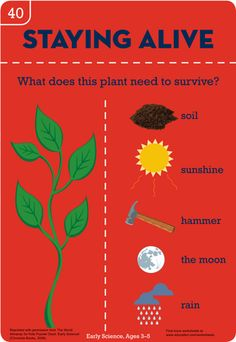Worksheets: What a Plant Needs: Beginner's Botany