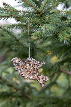 Homemade Bird Seed Ornament