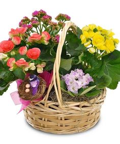 Send the whimsy of the season with a basket of beautiful blooming plants! #BicesFlorist