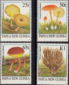 Papua New Guinea 1995 Fungi Set Fine Mint SG 762/5 Scott 872/5 Other European and British Commonwealth Stamps HERE!