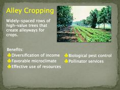 Alley Cropping provides a variety of benefits to the crops planted within the rows. Slide courtesy of USDA National Agroforestry Center.