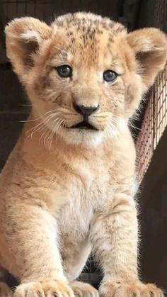Cute Wild Animals, Cute Little Animals, Cute Funny Animals, Super Cute Animals, Animals And Pets, Exotic Animals, Happy Animals, Farm Animals, Cute Baby Cats
