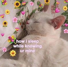 Oh so wholesome Cute Cat Memes, Cute Love Memes, Funny Memes, Wholesome Pictures, Response Memes, Cute Baby Cats, Cute Messages, Cat Aesthetic, Wholesome Memes