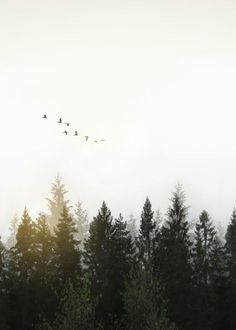 Digitally altered images of a foggy Swedish forest landscape in dawn with flock of birds flying over the trees.Created from multiple images added together in Photoshop and edited in Lightroom Photography Beach, Forest Photography, Landscape Photography Tips, Amazing Photography, Travel Photography, Photography Backdrops, Photography Business, Photography Lighting, Photography Composition