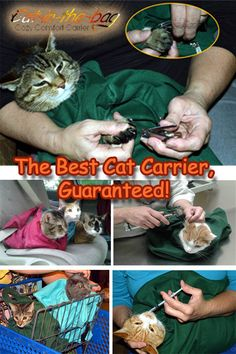 Save 10% on Cat-in-the-bag Cozy Comfort Carriers through Dec. 4, and never struggle with nail trimming again! Our soft, roomy, comfortable travel bag is also a perfect helper at those times when you have to clean ears, clean teeth or medicate! Now you don't have to force your cat into a crate when it's time to travel! Our carrier is easy to use, and it helps the vet, too! To order, visit www.cat-in-the-bag.com. Clean Ears, Clean Teeth, Teeth Cleaning, Kitty Kitty, Cool Cats, Travel Bag, Animal Kingdom, Crates, Fur Babies