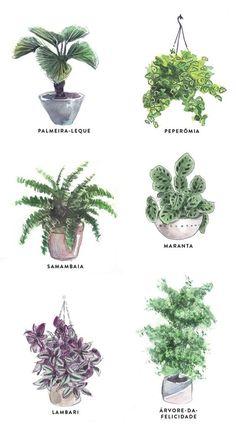 13 plantas ideais para espaços fechados Em vez de achar que você não tem talento para cuidar de uma espécie viva, saiba que o problema pode estar na escolha errada do tipo. Descubra sua cara-metade entre os nossos selecionados e encha a vida de verde