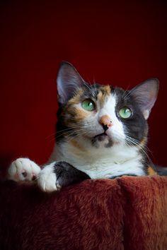 I love cats I love every kind of cat I just wanna hug them all but I can't . Can't hug every cat. Love that sooooooonnnnnnng!!!