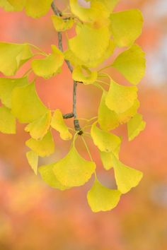 Yellow Fall Foliage – Learn About Trees With Yellow Fall Leaves