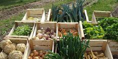 Cette petite commune du Haut-Rhin, qui veut assurer sa souveraineté alimentaire, a créé sa propre filière agricole.