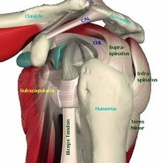 Exercises for Rotator Cuff Tendinitis