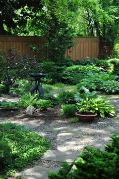 Green sanctuary. And no mowing required! #landscaping #ideas #nograss #green #sanctuary