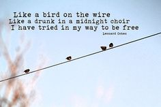 Like a Bird on the Wire - Leonard Cohen art print, photography, wall art, lyrics, birds on the wire, photography, travel, typography