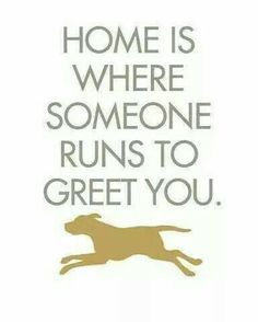❤ Or already waiting at the door when I open it. Cats, btw.