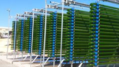 Eight Serbian scientists are leading a research project to develop the commercial production of biofuel from algae. The pioneering project is supported by the NATO Science for Peace and Security (SPS) Programme and is carried out by Belgrade's Institute for Multidisciplinary Research in cooperation with Manchester University in the United Kingdom and Baylor University in the United States.