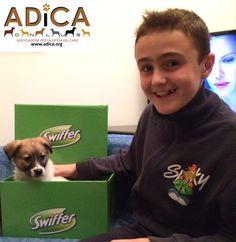 Koby del canile @ADICA_Onlus con la sua nuova famiglia! @mysocialpet_it #SwifferEffect