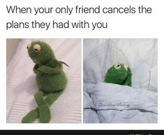 Top 12 lol so True Hilarious Memes - Funny photo Funny Kermit Memes, Really Funny Memes, Stupid Funny Memes, Funny Relatable Memes, Haha Funny, Funny Fails, Funny Minion, Fun Funny, Kermit The Frog Meme