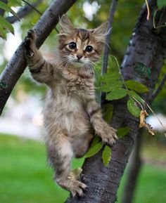 'I is a squirrel-cat'