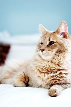 Fat and cute cat
