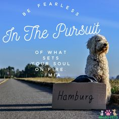 Be Fearless in the Pursuit of what sets your soul on fire. #Quotes #Success #Dogs #pets #Animals #PaleoPets  Click ❤️ Like and Share if you agree..... 👈⭐️