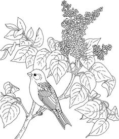 Printable Flower Coloring Pages, Coloring Pages For Kids, Flowering Shrubs, Lilac Flowers, Online Coloring, More Pictures, Les Oeuvres, Bird, Lilacs
