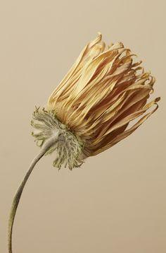 Artistic Installation, Natural Forms, Still Life Photography, Ikebana, Ss16, Dried Flowers, Art Direction, Flower Art, Flower Power