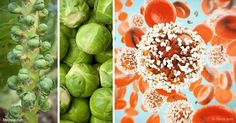 Brussels sprouts require quite a bit of space; they are among the hardiest of the cabbage family, and overnight frost will bring out their sweetness. http://articles.mercola.com/sites/articles/archive/2017/09/01/growing-brussels-sprouts.aspx?utm_source=dnl&utm_medium=email&utm_content=art1&utm_campaign=20170901Z1&et_cid=DM156571&et_rid=36380590
