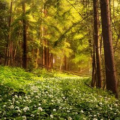 everglade :: spring forest in switzerland [Robin Halioua]