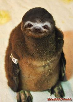 - Sloth Penguin / 28 Unsettling Animal Mashups That Should Probably Never Have Happened animals silly animals animal mashups animal printables majestic animals animals and pets funny hilarious animal Ugly Animals, Animals And Pets, Cute Animals, Photoshopped Animals, Animal Mashups, Funny Photoshop, Montage Photo, Types Of Animals, Mundo Animal