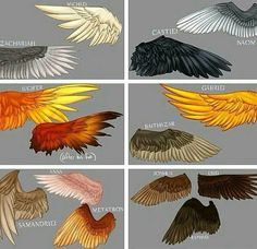 Wings of Supernatural.