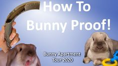 How To Bunny Proof | Bunny Apartment Tour 2020 | My House of Tiny Pets T... Rabbit Information, Wire Management, Dipper, Bunny, Tours, Pets, Places, Cute Bunny, Rabbit
