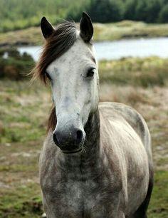 Ein stilistisches Pferd