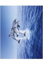 Dolphin Trio Dolphins, Whale, Posters, Mini, Animals, Whales, Animales, Animaux, Poster