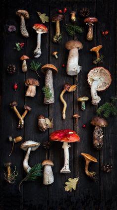 Nature Aesthetic, Witch Aesthetic, Fungi, Mushroom Art, Turkey Tail Mushroom, Paperclay, Botanical Art, Mother Nature, Art Inspo